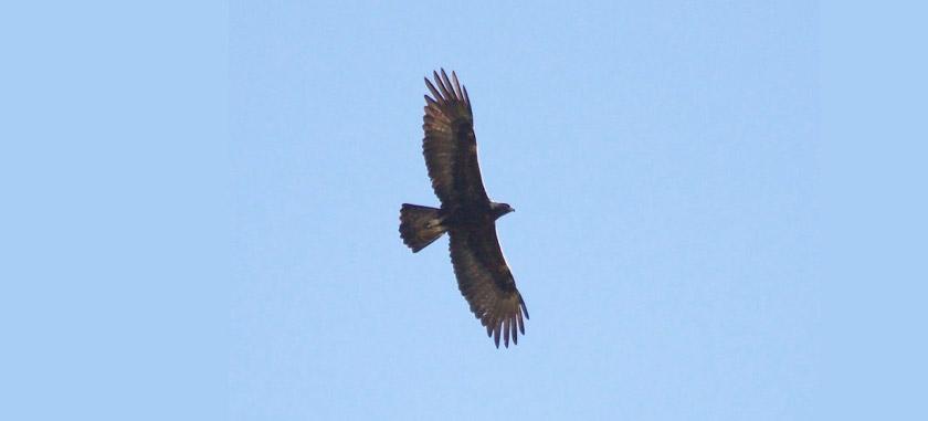 CV Bird Club Field Trip to Bobcat Ranch