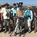 CV Bird Club Shorebird Field Trip, Yolo County